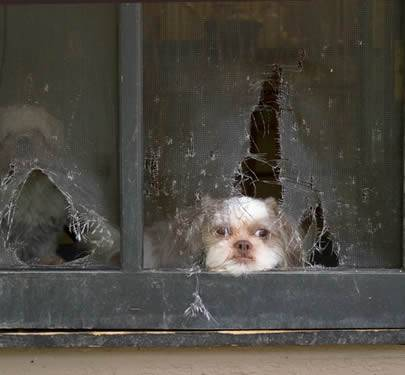 Pet Screen Prevent Insects Protect Children And Pets