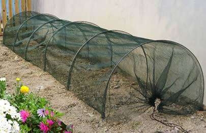 A small protective screen made of plastic window screen on the land.