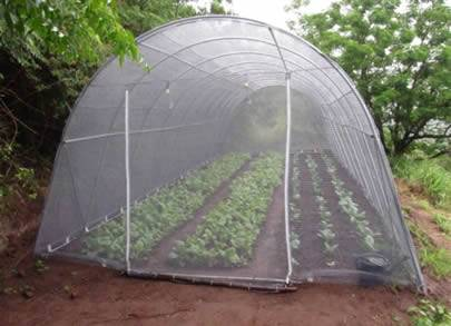 A greenhouse made of plastic insect screen on the land.
